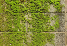How to Remove Moss From Concrete